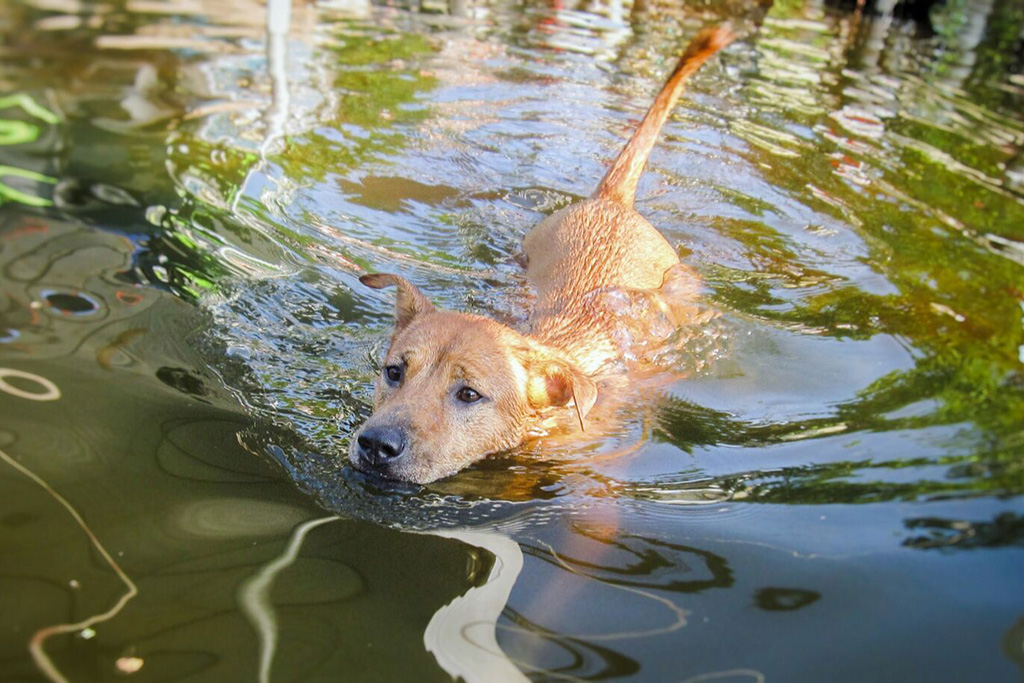 Toyota Lends a Hand to Help Animals Displaced by Hurricanes