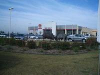 Jerry Durant Toyota Used Cars of Granbury