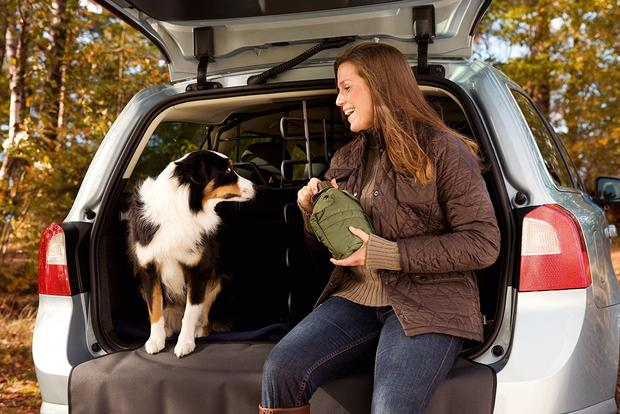Safety Tips for Traveling With Your Pet featured image large thumb0